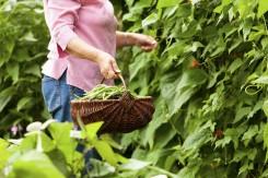 Šiemet jūsų darže gali augti...