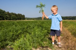 Į derlių taikosi musės...