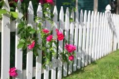 5 klausimai apie darželio, kambarinius augalus...