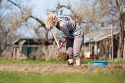 Kaip pagerinti daržo dirvą?